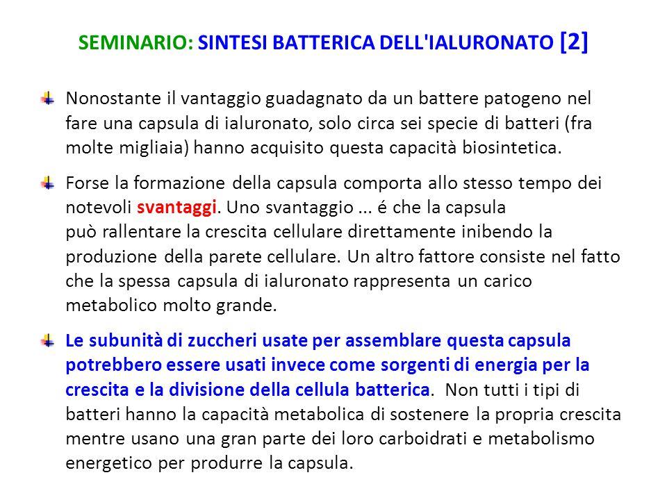 SEMINARIO: SINTESI BATTERICA DELL IALURONATO [2]
